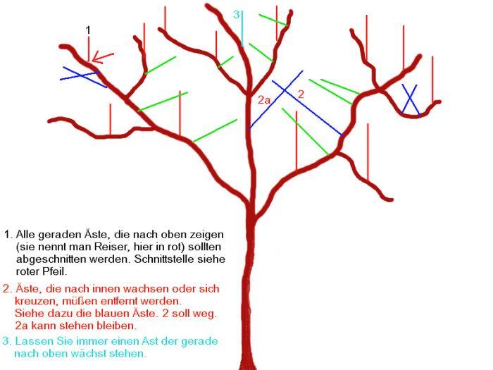 Häufig September 2003 04 Obstbäume schneiden FR77